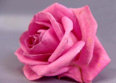 Psicologia del color rosa brillante