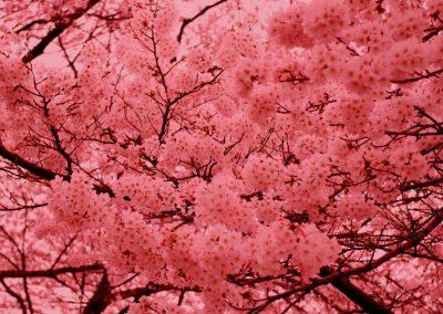 Psicología del color rosa terroso