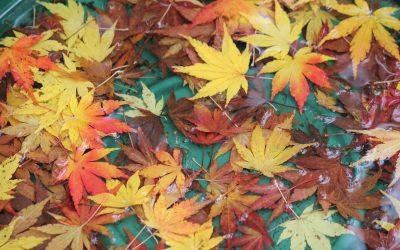 Los colores del otoño 2017 según Pantone